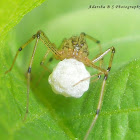 Spider with its Egg