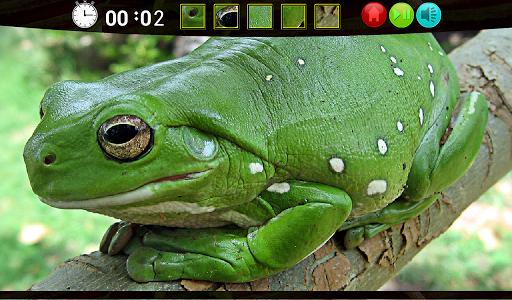 Froggy Hidden Images