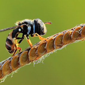 Stand here alone by Fadel Satriawan - Animals Insects & Spiders