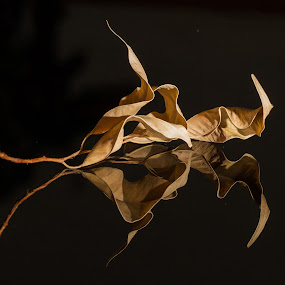 Dead Fig Leaf by Craig Lybbert - Nature Up Close Leaves & Grasses ( fall leaves on ground, reflection, macro, fig, leaf, close,  )