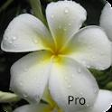 Kauai Flowers Pro logo