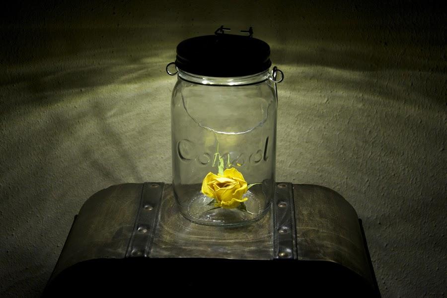by Anneline Gouws - Flowers Single Flower