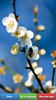 Screenshot of Flowers HD Wallpapers