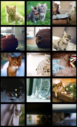 Beautiful Cats HD Wallpapers