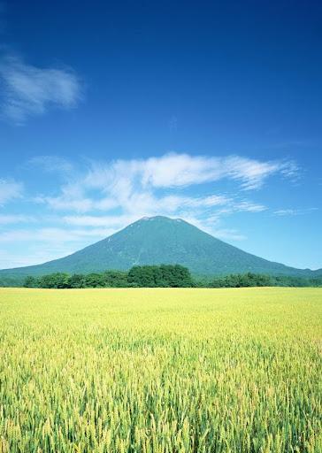 Hokkaido Wallpaper