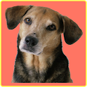 Animal Sounds Soundboard icon