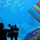 Aquarium Videos icon
