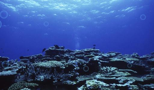 Silent Seabed Live Wallpaper