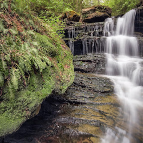 Forgotten Falls May 2014 by Aaron Campbell - Nature Up Close Other Natural Objects ( water, falls trail, lush, green, waterfall, moss, cascades, pennsylvania, ferns, spring, motion blur, ricketts glen, nature, state park, long exposure, rasp, slow shutter, forgotten falls, ganoga glen, fairmount township )