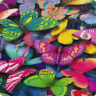 Butterfly Live Wallpaper HD 5 icon