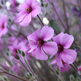 Flowers by Vrinda Mahesh - Flowers Flower Gardens ( colors, garden flowers, flowers, spring )