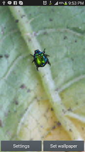 Green Bug Live Wallpaper - screenshot thumbnail