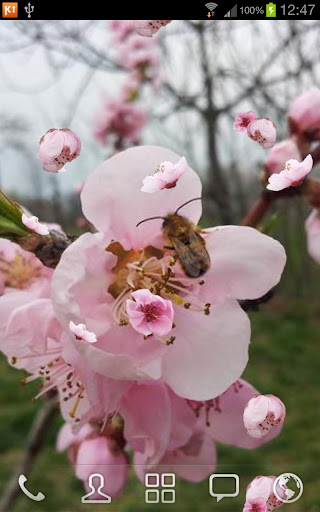 Peach Tree and Bee LWP PRO