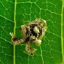 Leafhopper ?