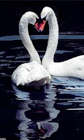 Screenshot of Live Wallpaper Two Swans