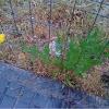 Planta Silvestre