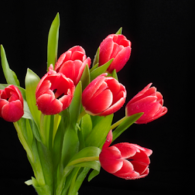 Tulip by Marcelino Moningka - Flowers Flower Arangements ( red, tulips, flower )