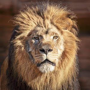 Bored Lion-1.jpg