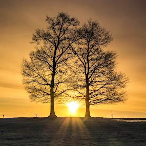 inseparable by Romain Bruot - Landscapes Sunsets & Sunrises ( tree, sunrise, landscape, morning, sun )