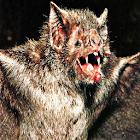 Bat Sound Effects icon