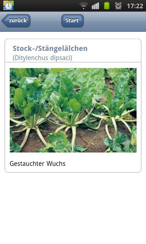 Krankheiten der Zuckerrübe- screenshot