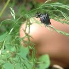 Grass spider maybe?