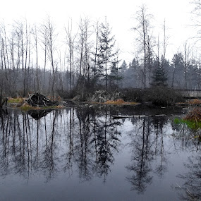 Kingfisher Creek by Art Straw - Landscapes Waterscapes ( reflection, beaver, marsh, landscape, swamp, lodge,  )