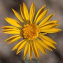 unknown yellow flower