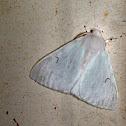 Black V Moth