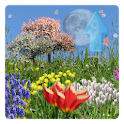 Spring Flowers Live Wallpaper logo