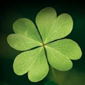 3D Four-Leaf Clover Wallpaper icon