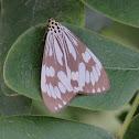 Nyctemera moth