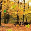 Live Wallpaper Autumn icon