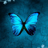 Butterflies LW