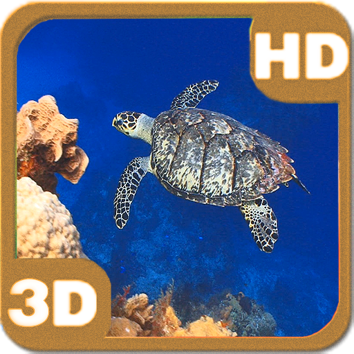 Turtle Swimming Coral Reef HD