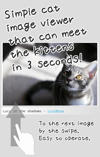 Kittens Soon