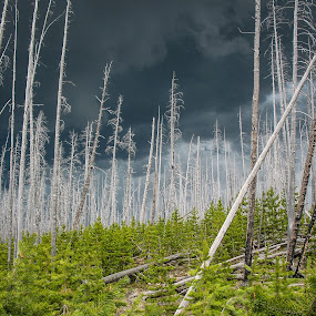 Stormy Afternoon in Yellowstone by David Andrus - Landscapes Forests ( yellowstone national park )