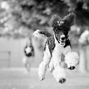bounding by Shelley Franklin - Animals - Dogs Running