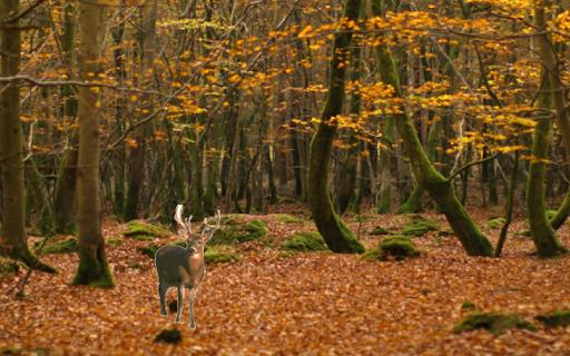 Deer Hunting Kids Game