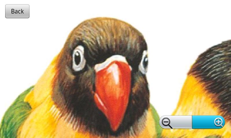 The World of Birds- screenshot
