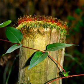 by Sandra Whitt - Nature Up Close Mushrooms & Fungi (  )