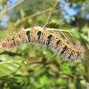 Silk Moth Cat