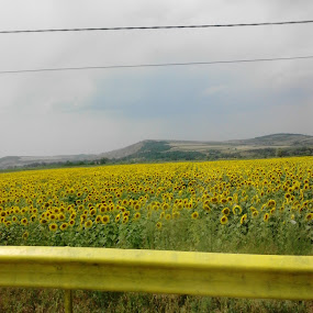 by Tadeia Fedor - Landscapes Prairies, Meadows & Fields (  )
