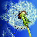 NEW Galaxy S3 Dandelion LWP