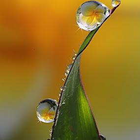 :: Twist :: by Dedy Haryanto - Nature Up Close Natural Waterdrops (  )