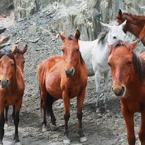 Be FREE by Shayaan Noori - Animals Horses ( animals, nature, horses, freedom, wildlife, animal,  )
