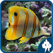 Fish Jigsaw Puzzles