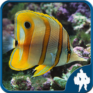 Fish Jigsaw Puzzles for PC and MAC