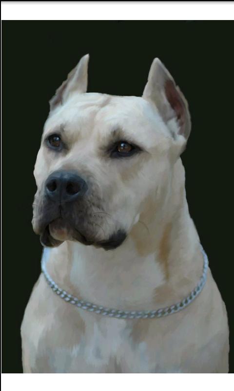 Perros.Todas las razas y fotos - screenshot