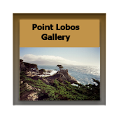 Point Lobos Gallery